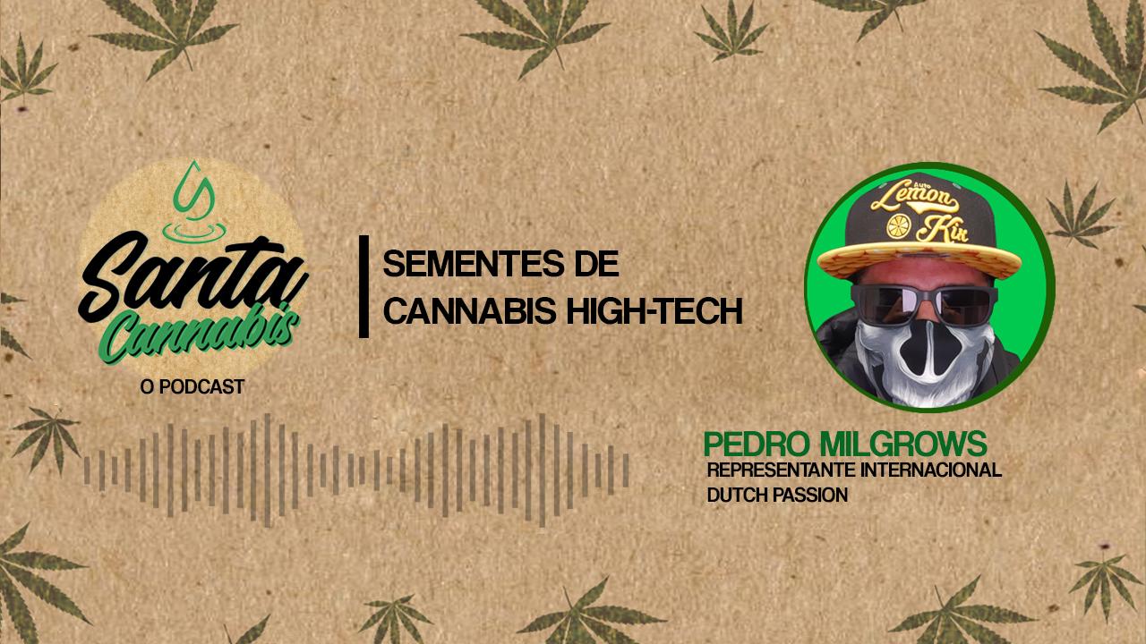 Conheça as sementes de Cannabis HIGH Tech